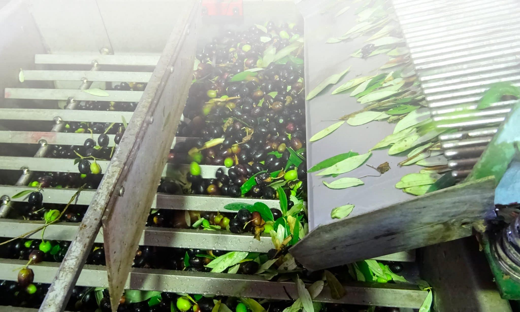 FranotioManestrini Home Slider Olive